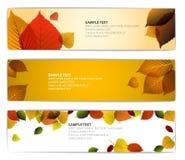 自然横幅秋天新鲜的水平的叶子 库存图片