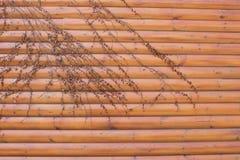 自然橙色木板条称呼与美丽的干常春藤的墙壁纹理 免版税库存图片