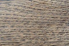 自然橡木样式 橡木纹理宏观射击  喂res照片 图库摄影