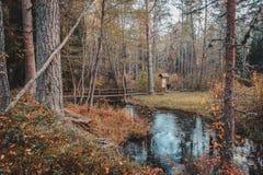 自然步行 杉木森林、足迹和自然环境 秋天横向 免版税图库摄影