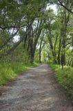 自然步行 图库摄影