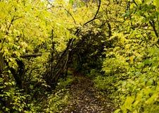 自然步行 库存图片