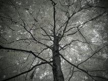 自然步行 库存照片
