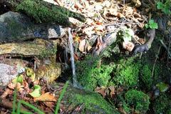 自然水春天 库存照片