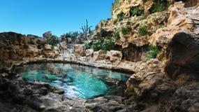 自然水蓝色丝毫鱼企鹅山植物 免版税库存图片