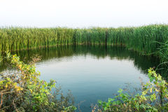 自然池塘在泰国 免版税库存照片