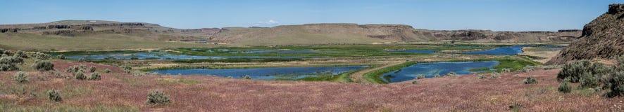 自然池塘在高沙漠 库存图片