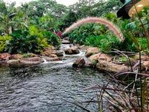 自然池塘 库存照片