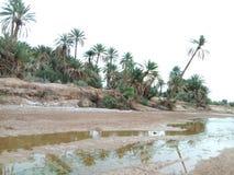 自然河阿尔及利亚真正的pic  库存图片