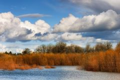 自然沼泽地秋天风景在多云天空下 免版税图库摄影