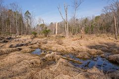 自然沼泽地蜜饯 库存图片