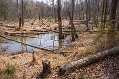 自然沼泽地蜜饯 免版税库存照片