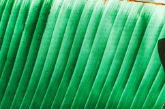 自然海报 绿色掌上型计算机分行 特写镜头 热带震动 图库摄影