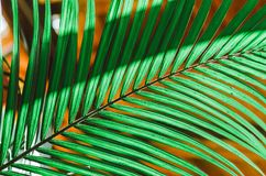 自然海报 绿色掌上型计算机分行 特写镜头 热带震动 库存照片