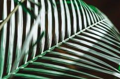 自然海报 绿色掌上型计算机分行 特写镜头 热带震动 库存图片