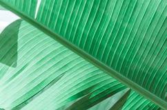 自然海报 绿色掌上型计算机分行 特写镜头 热带震动 免版税库存图片