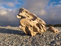 自然海滩小卵石雕刻的被水冲蚀木头 免版税库存照片
