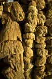自然海绵 免版税库存图片