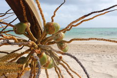 自然海滩树海 库存图片