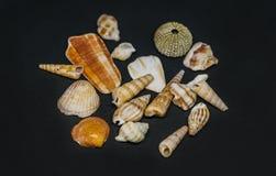 自然海Fosils壳 免版税图库摄影