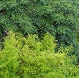 自然深绿和淡色绿色树离开背景 免版税库存图片