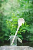 自然温室的草本 免版税库存照片