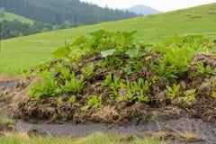 自然温床在草甸 库存图片