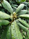 自然湿叶子 免版税库存照片
