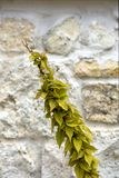 自然灰棕色的黄色植物向背景扔石头 库存照片