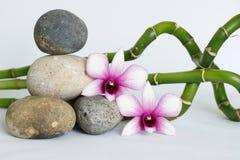 自然灰色小卵石在与两朵双色的兰花的禅宗生活方式安排了在白色背景扭转的竹子的右边 免版税库存图片