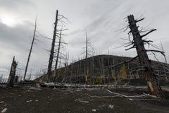 自然灾害:堪察加半岛的死的木死的森林 免版税库存照片