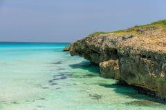 自然热带背景美好的邀请的迷人的看法  免版税库存图片