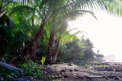 自然热带风景棕榈植物群 免版税图库摄影