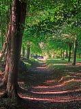 自然爱尔兰 免版税图库摄影