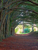 自然爱尔兰 库存图片