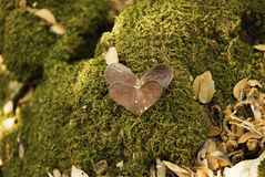 自然爱:在青苔背景的2片心形的叶子 免版税库存照片