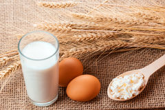 自然牛奶店自创产品 库存照片