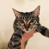 自然猫的秀丽 免版税库存照片