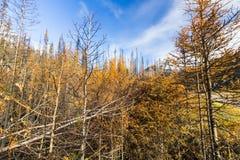 自然班夫国家公园加拿大的颜色 免版税库存图片