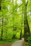 自然生活 免版税库存照片