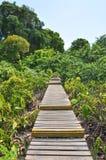 自然痕迹在Krabi,泰国 库存照片