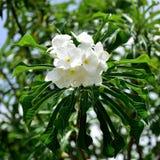 自然白花花束  图库摄影