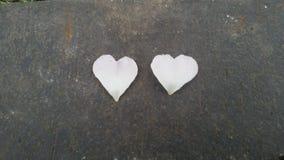 自然的心脏 免版税库存照片