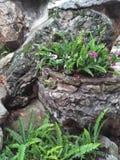 自然的想法在庭院里 库存照片