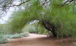 自然的拱道 免版税图库摄影