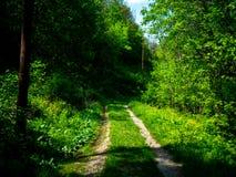 自然的旅途 免版税图库摄影