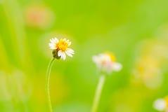 自然的明亮的颜色与一棵开花的草的 库存图片