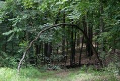 自然的曲拱 免版税库存图片