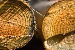 自然的木料 免版税库存图片