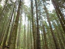 自然的森林 库存图片